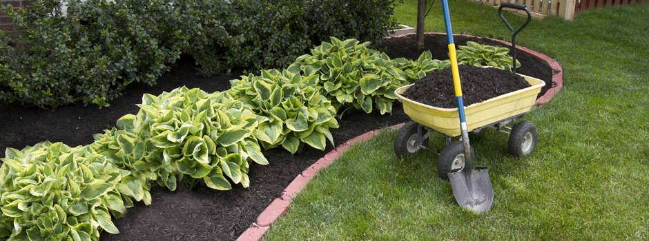 Mulch Buying Guides